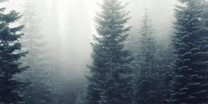 skog gran norden dimma saga mytologi finland träd natur miljö foto pexels