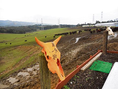 Det osynliga monstret – Tre år efter Fukushima