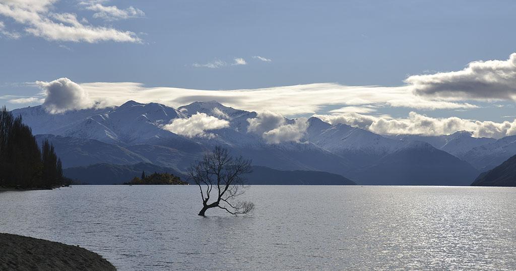 Wanaka-trädet nya zeeland foto tina nyfors