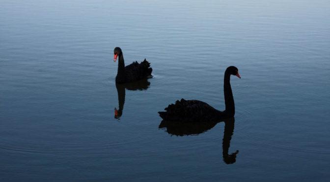 Framtiden skymtar mellan svarta svanar