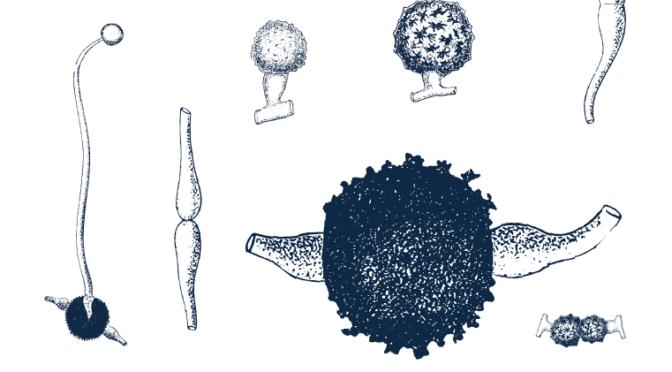 Frisk jord med hjälp av svampar