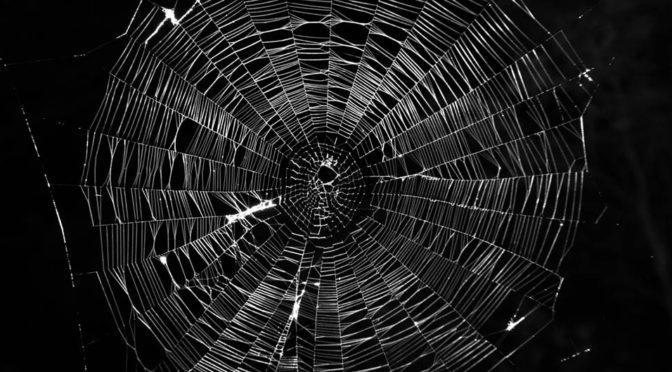 Eldflugslampor, spindelsilke och svampskor