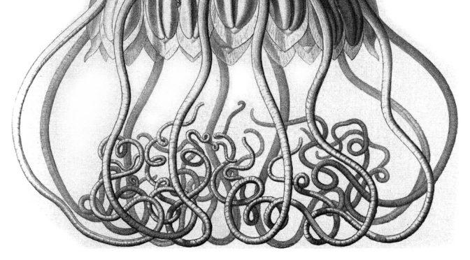 H. P. Lovecraft – skönheten i skräcken